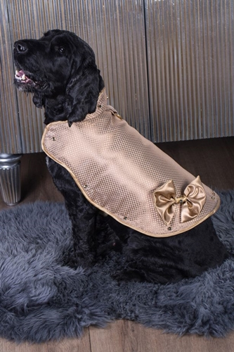 Dogilike.com :: ชวนดู! เสื้อน้องหมาแพงที่สุดในโลก ทำจากทอง 24K ราคา 43 ล้านบาท