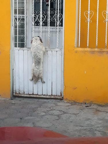 Dogilike.com :: คลิปนี้ต้องดู! นาทีเจ้าตูบแสนรู้ช่วยเพื่อนสุนัขหัวติดลูกกรง