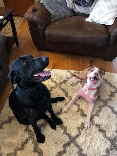 Dogilike.com :: หนุ่มเตี๊ยมศูนย์พักพิงฯ ขอแฟนสาวแต่งงาน มีเจ้าตูบร่วมทำภารกิจด้วย !
