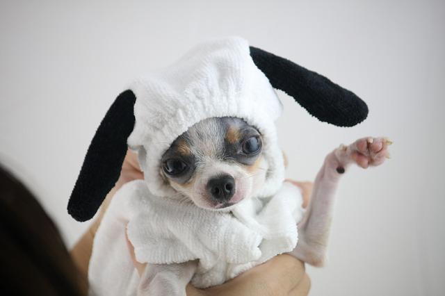 Dogilike.com :: ข้อควรระวัง ! ซัมเมอร์นี้รู้ไว้ก่อนพาน้องหมาแต่ละวัยไปว่ายน้ำ