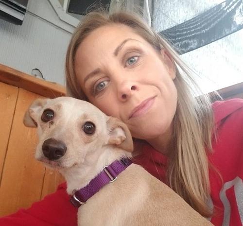 Dogilike.com :: เจ้า LOL หมาชิวาวาผู้ทำลายสถิติโลก คลอดลูกเยอะถึง 11 ตัว !!