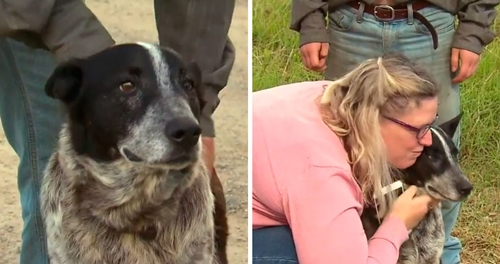 Dogilike.com :: ฮีโร! สุนัขหูหนวกตาบอดช่วยชีวิตหนูน้อย 3 ขวบ หลงป่านาน 17 ชั่วโมง !