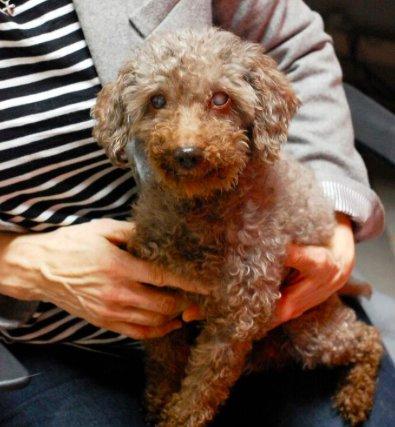 Dogilike.com :: ปลื้มใจ! หนูน้อยรับตูบสูงวัยหูหนวกตาบอดไปเลี้ยง สัญญาจะดูแลอย่างดี
