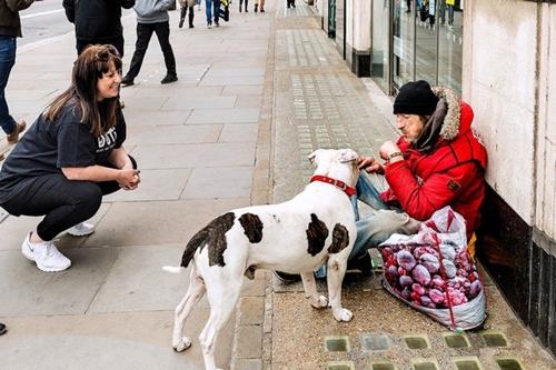 Dogilike.com :: ผู้หญิงคนนี้ใช้เวลาตลอด 6 ปีช่วยเหลือสุนัขของคนไร้บ้านในอังกฤษ !