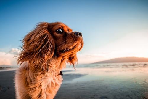 Dogilike.com :: จัดอันดับ 5 โรคฮิตของน้องหมา พบบ่อยในช่วงหน้าร้อน !