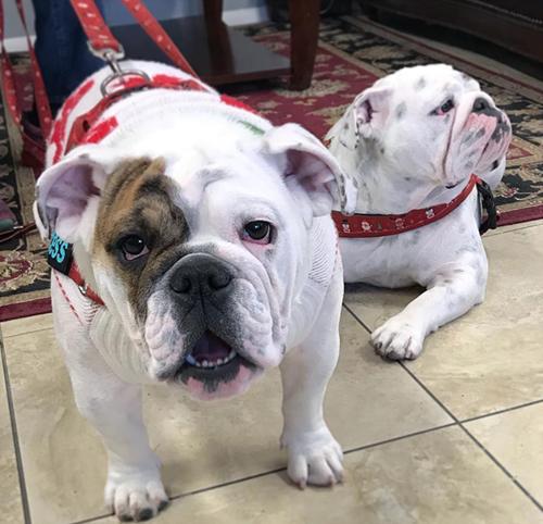 Dogilike.com :: จัดอันดับ 5 สายพันธุ์น้องหมาที่ขาดน้ำไม่ได้ !!