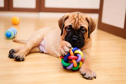 Dogilike.com :: วันเดียวน้องหมาก็อยู่ได้ ... สิ่งที่ต้องเตรียมเมื่อต้องให้ตูบอยู่บ้านลำพัง