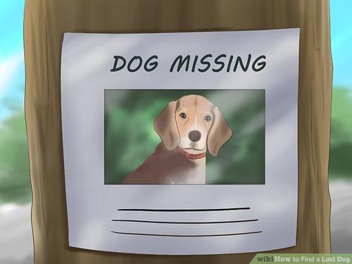 Dogilike.com :: ตั้งสติเมื่อน้องหมาหายออกจากบ้าน ... ต้องทำยังไงบ้าง !