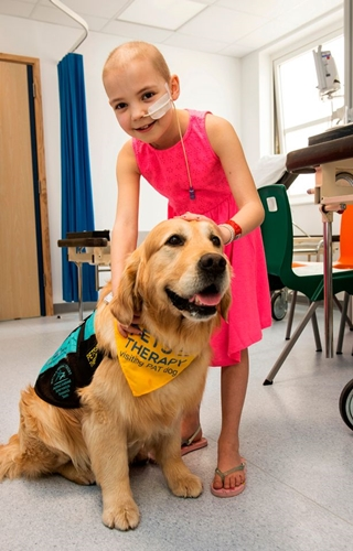 Dogilike.com :: อังกฤษเริ่มนำสุนัขบำบัดมาดูแลและเป็นกำลังใจให้ผู้ป่วยในโรงพยาบาล !