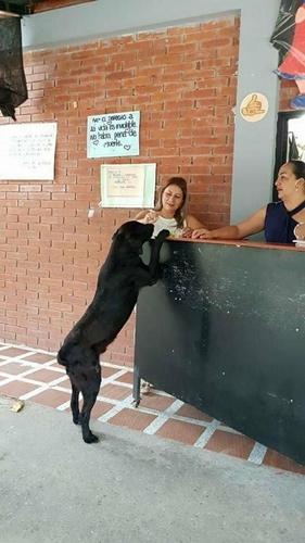 Dogilike.com :: เจ้า Negro ตูบสุดฉลาดคาบ ใบไม้ ไปแลก ขนม ที่ร้านค้าทุกวัน !