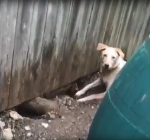 Dogilike.com :: ฝันเป็นจริง! เจ้าของเจาะรั้วทำประตูให้สุนัข 2 บ้านวิ่งเล่นด้วยกันได้