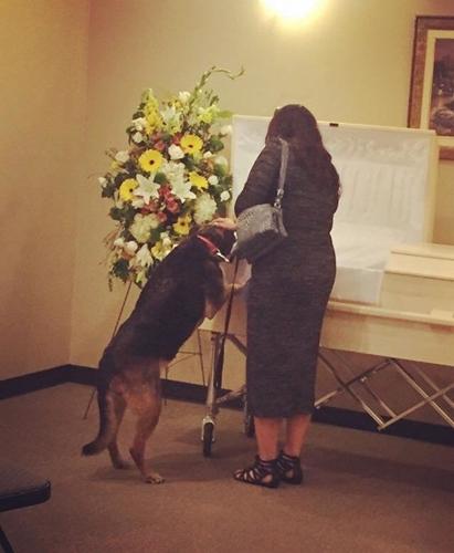 Dogilike.com :: ภาพนาทีเจ้าตูบร่วมงานศพ บอกลาเจ้าของที่รักเป็นครั้งสุดท้าย !