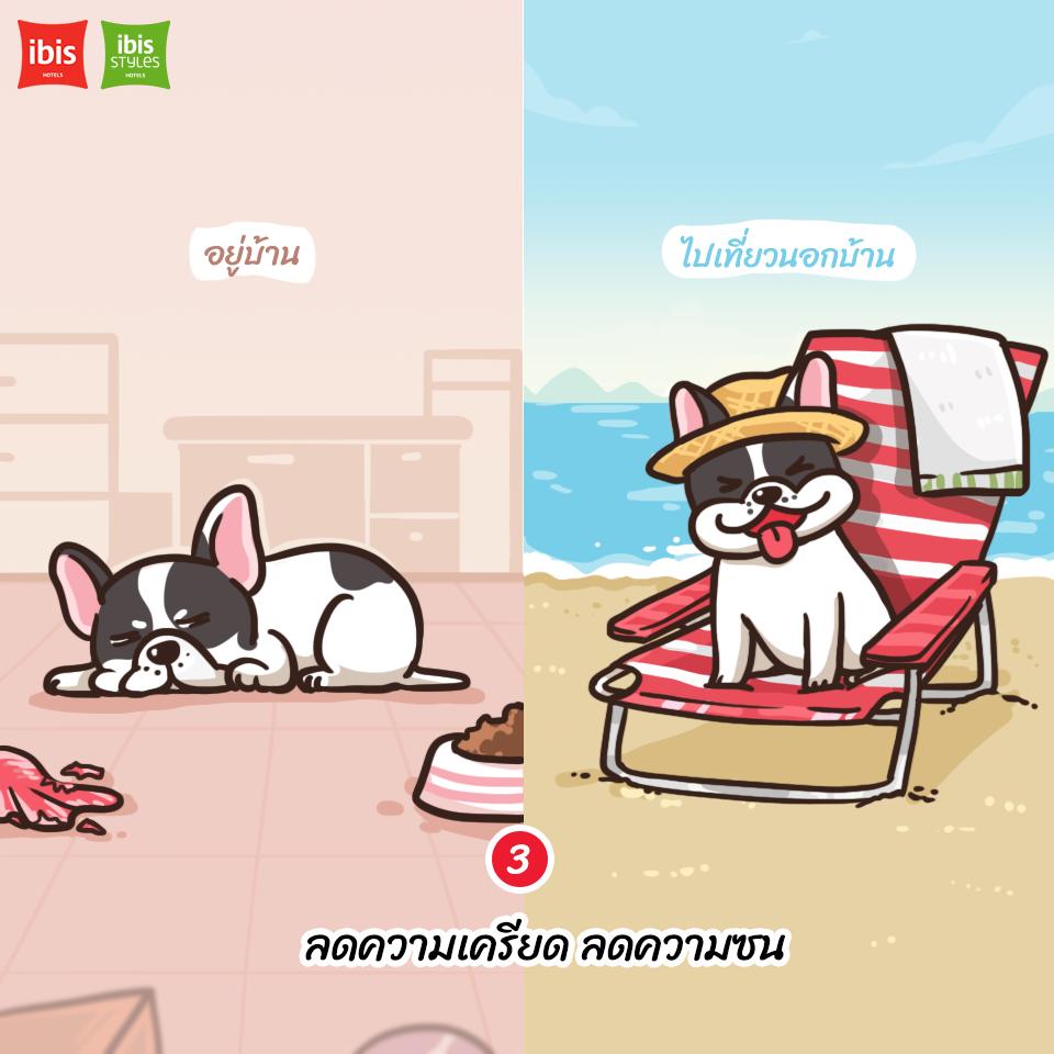 Dogilike.com :: 5 เหตุผล ที่เราควรพาน้องหมาออกเดินทาง