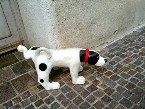 Dogilike.com :: เลือกที่จะฝึกหรือตามเช็ด! พฤติกรรมฉี่ไม่เป็นที่ของสุนัขตัวโปรด