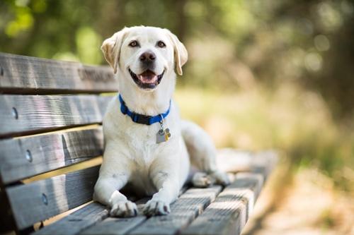 Dogilike.com :: จัดอันดับ 5 สายพันธุ์ที่ชอบอ้อนคนแปลกหน้า