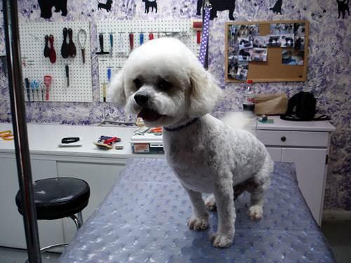 Dogilike.com :: 4 เรื่องต้องรู้ก่อนพาน้องหมาไปกรูมมิ่ง