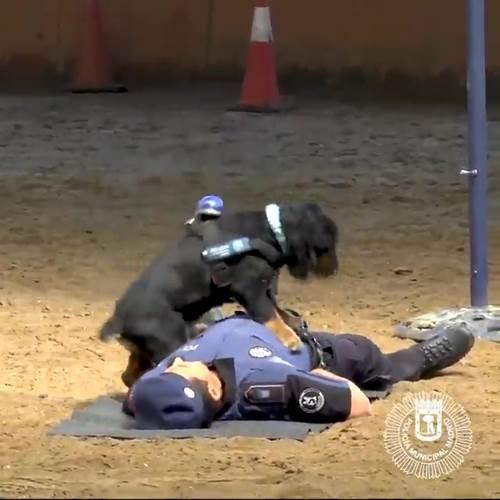 Dogilike.com :: ��Ի�عѢ���Ǩ�ҸԵ��÷� CPR ���ª��Ե �ҹ�������ú�����������!