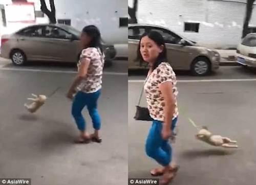 Dogilike.com :: คนรักสุนัขฉุน! หญิงชาวจีนโมโหเจ้าตูบไม่ยอมเดิน ลากสายจูงเหวี่ยงจนตัวลอย