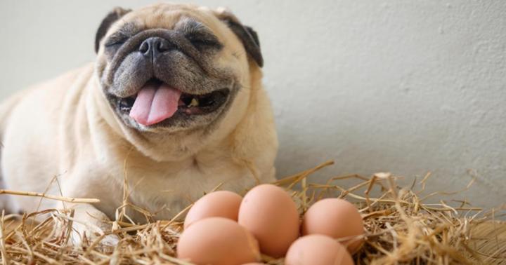 Dogilike.com :: เลี้ยงน้องหมาแบบไม่ต้องกินคลีนก็เฮลตี้ได้ !