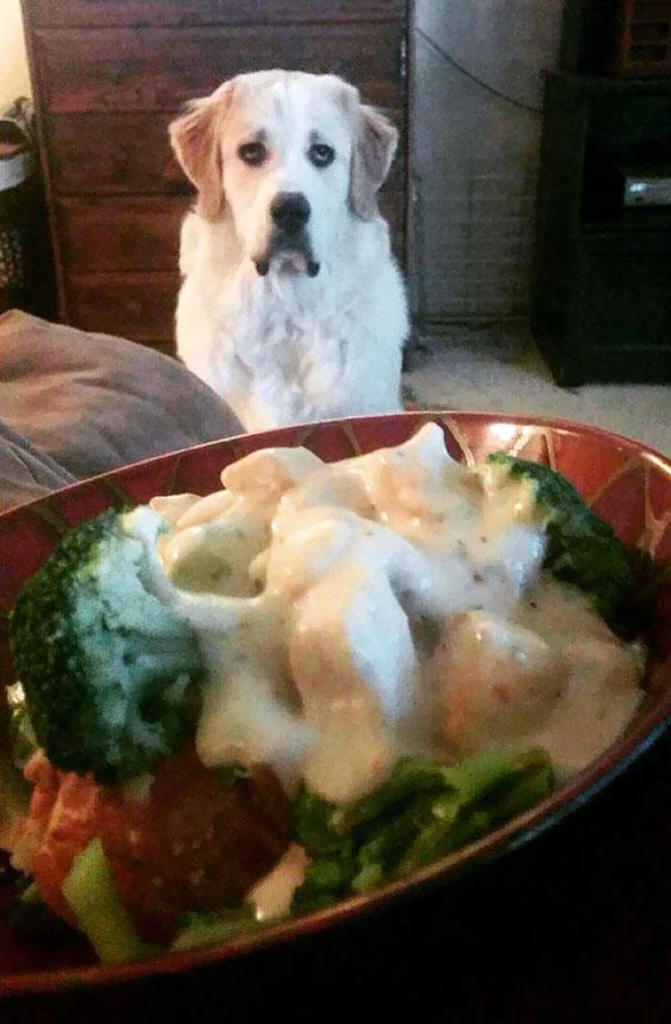 Dogilike.com :: 20+ ภาพชวนขำ เมื่อเจ้าของถูกน้องหมาสะกดจิตขออาหาร