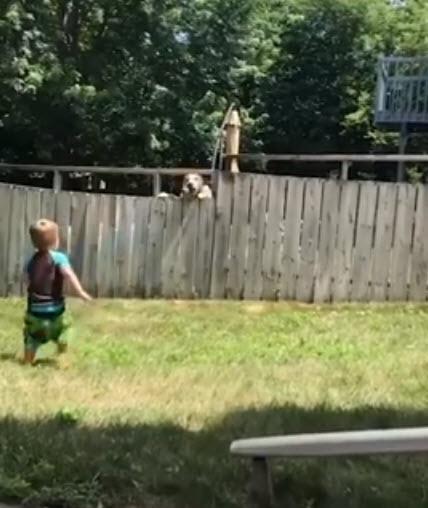 Dogilike.com :: คลิปนี้ต้องดู! เมื่อเจ้าตูบข้างบ้านชวนหนูน้อยเล่นโยนลูกบอลข้ามรั้ว