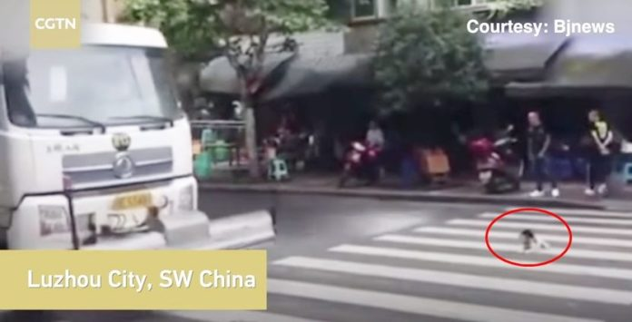 Dogilike.com :: ซึ้ง! หนุ่มขับรถฉีดถนนปิดวาล์วน้ำฉุกเฉิน เพราะกลัวหมาเปียก (คลิป)