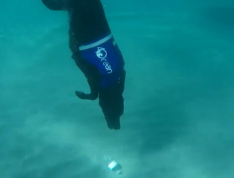 Dogilike.com :: รู้จักเจ้า Lila น้องหมาพิทักษ์ทะเล ดำน้ำคาบขวดพลาสติกไปทิ้ง