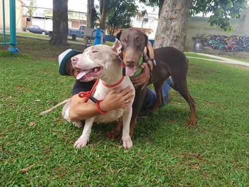 Dogilike.com :: เพื่อนบ้านสุดทน! แจ้งตำรวจให้ช่วยตูบหลังเจ้าของล่ามโซ่ ป่วยไม่รักษานับปี