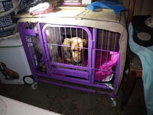 Dogilike.com :: อังกฤษเฮ! กฎหมายใหม่ห้ามซื้อสุนัขจากเพ็ทช็อป ฟาร์มไม่ขึ้นทะเบียน