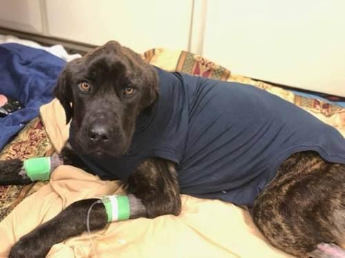 Dogilike.com :: หญิงมะกันจับหมาขังลืม อดอาหาร 1 เดือน เอาคืนอดีตแฟนหนุ่ม!