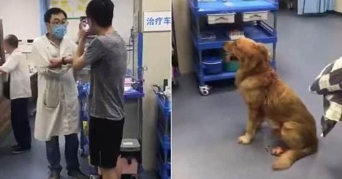 Dogilike.com :: หนุ่มบุกห้องฉุกเฉิน รพ.คน ขู่ฆ่าหมอที่ไม่ยอมรักษาหมาให้ !