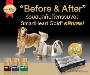 Dogilike.com :: SmartHeart Gold ชวนโพสต์ภาพถ่ายน้องหมาคู่กับถุงอาหารรับของรางวัลสุดพิเศษ !