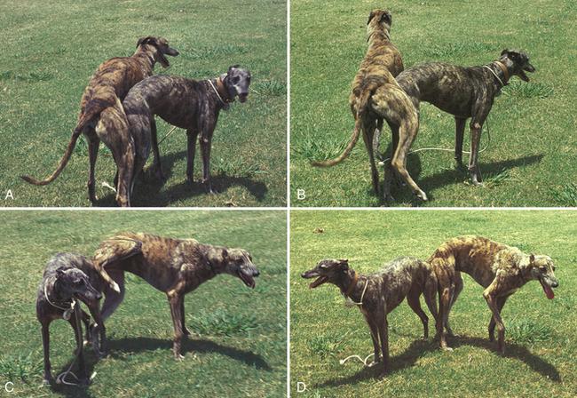 Dogilike.com :: เจาะลึก พฤติกรรมการฟีเจอริ่งของน้องหมา (18+)