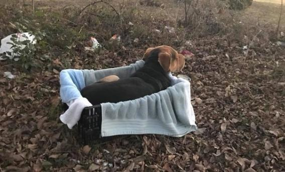 Dogilike.com :: จุดเริ่มต้นของปัญหาหมาจรในสังคมไทย ... ทำไมคนถึงตัดสินใจทิ้งสุนัข