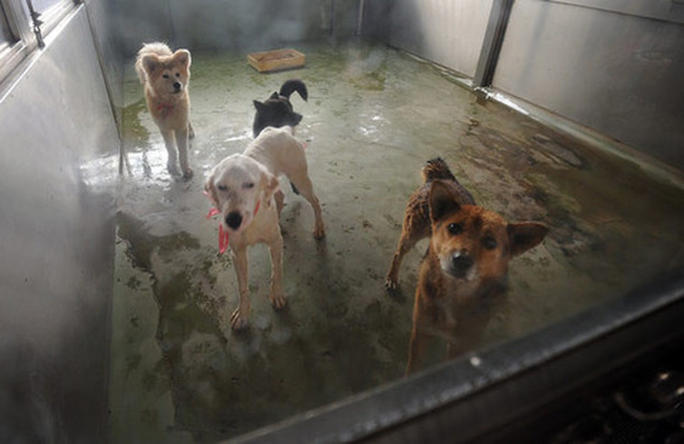 Dogilike.com :: Set zero แก้ปัญหาโรคหมาบ้า (โรคเรบีส์) ได้จริงหรือ ?