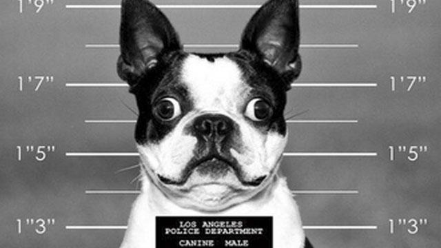Dogilike.com :: 4 พฤติกรรมเลี้ยงหมาผิด ๆ มีสิทธิถูกลงโทษตามกฎหมาย