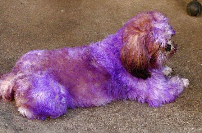 Dogilike.com :: 5 เรื่องที่คน(บางคน)ชอบทำและความเชื่อผิด ๆ เกี่ยวกับน้องหมา