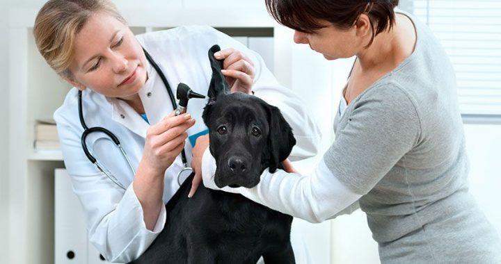 Dogilike.com :: คำโฆษณาเกินจริงของสัตวแพทย์ ที่คนรักหมาต้องระวัง !!