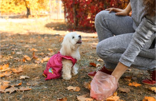 Dogilike.com :: น้องหมา(ใครไม่รู้)มาอึหน้าบ้าน ... จัดการปัญหาโลกแตกนี้ยังไงดี