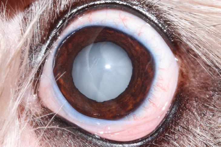 Dogilike.com :: เจ้าของต้องรู้!!! 7 โรคร้ายที่พบได้บ่อยในสุนัขแก่