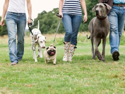 Dogilike.com :: แบบนี้ก็มีด้วย ... วันสำคัญแปลก ๆ เกี่ยวกับสุนัขทั่วโลก