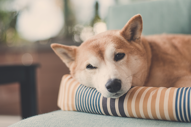 Dogilike.com :: เคล็ด(ไม่)ลับ การดูแลแผลกดทับให้น้องหมา