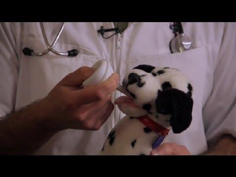 Dogilike.com :: การดูแลลูกสุนัขสำลักนม