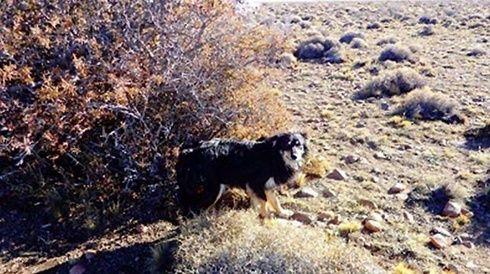 Dogilike.com :: อยู่ข้างกันจนวันสุดท้าย...รวมเรื่องน้องหมาเฝ้าศพเจ้าของ