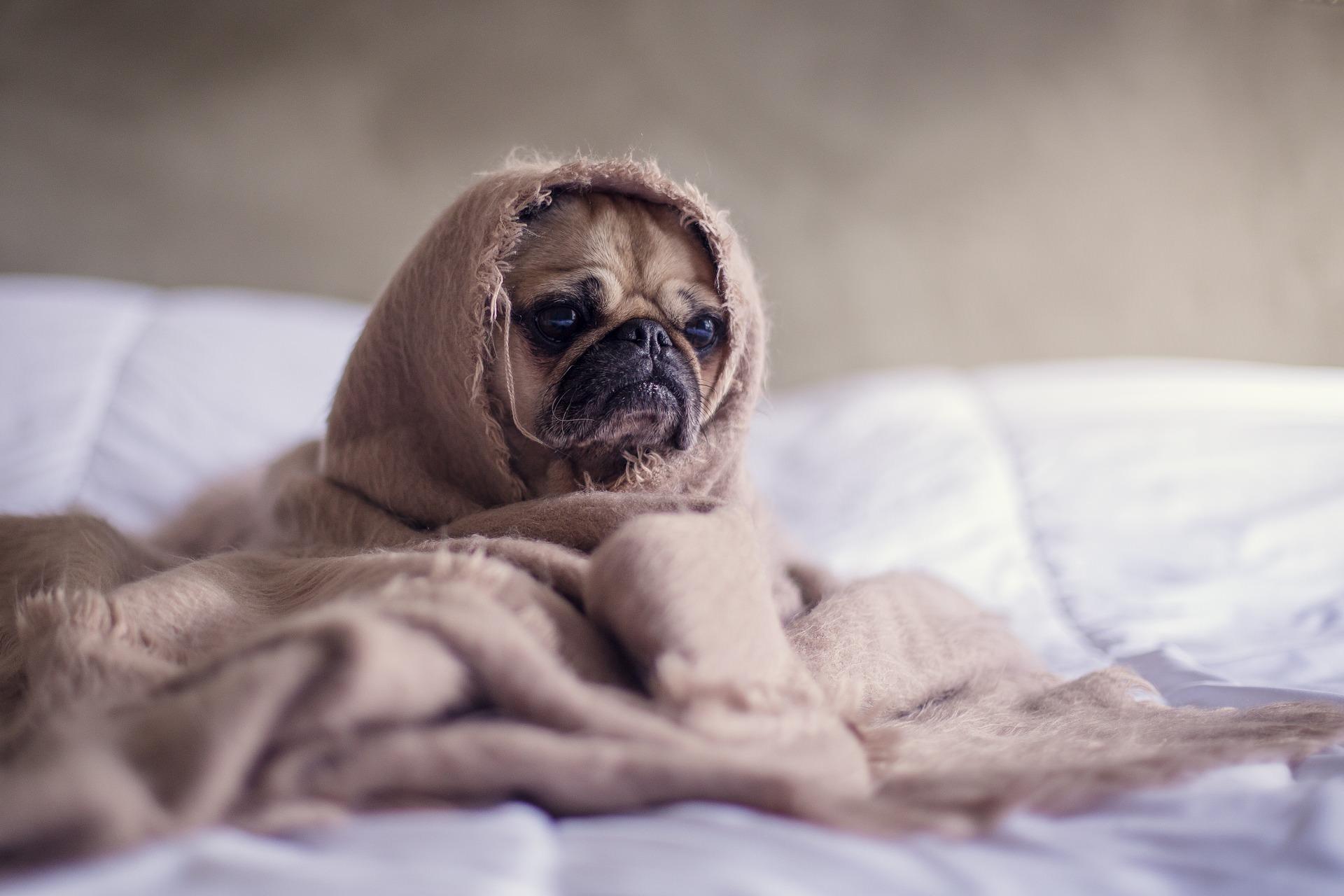 Dogilike.com :: เตรียมรับมือ!! โรคน้องหมาที่มากับหน้าหนาว