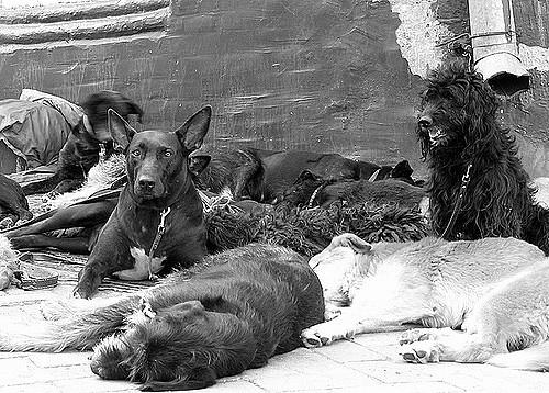 Dogilike.com :: เรื่องจริงสุดเศร้าที่คุณไม่รู้เกี่ยวกับสุนัขจรจัด