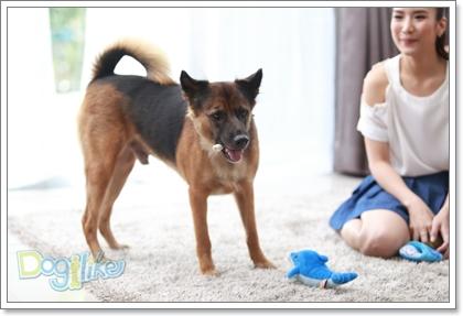 Dogilike.com :: เรื่องดี ๆ ของ 5 คนดังที่รับเลี้ยงน้องหมาไร้บ้าน