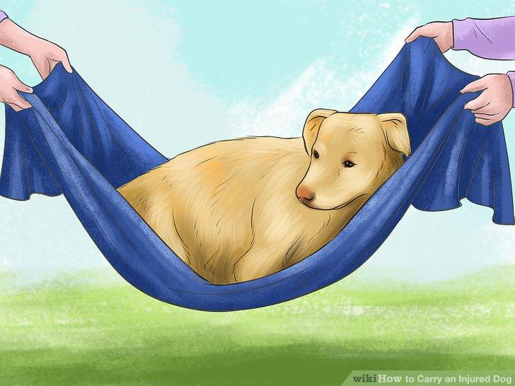 Dogilike.com :: มาดูวิธีเคลื่อนย้ายสุนัขบาดเจ็บที่กระดูกสันหลังอย่างปลอดภัย ไม่เสี่ยงอันตราย!