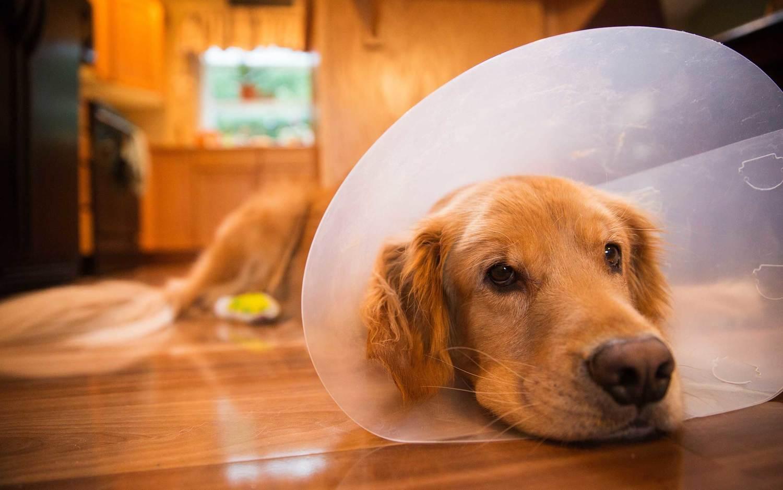 Dogilike.com :: คู่มือดูแลน้องหมาหลังผ่าตัดทำหมัน ฉบับ Dogilike