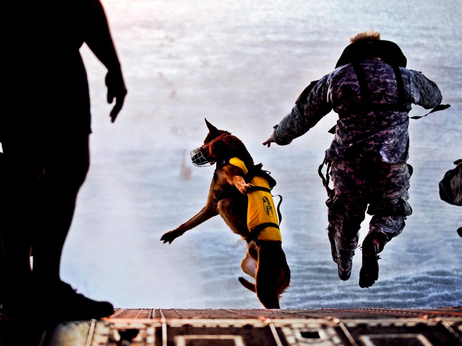 Dogilike.com :: 5 เหตุผลที่ต้องมีน้องหมาในงานกู้ภัย